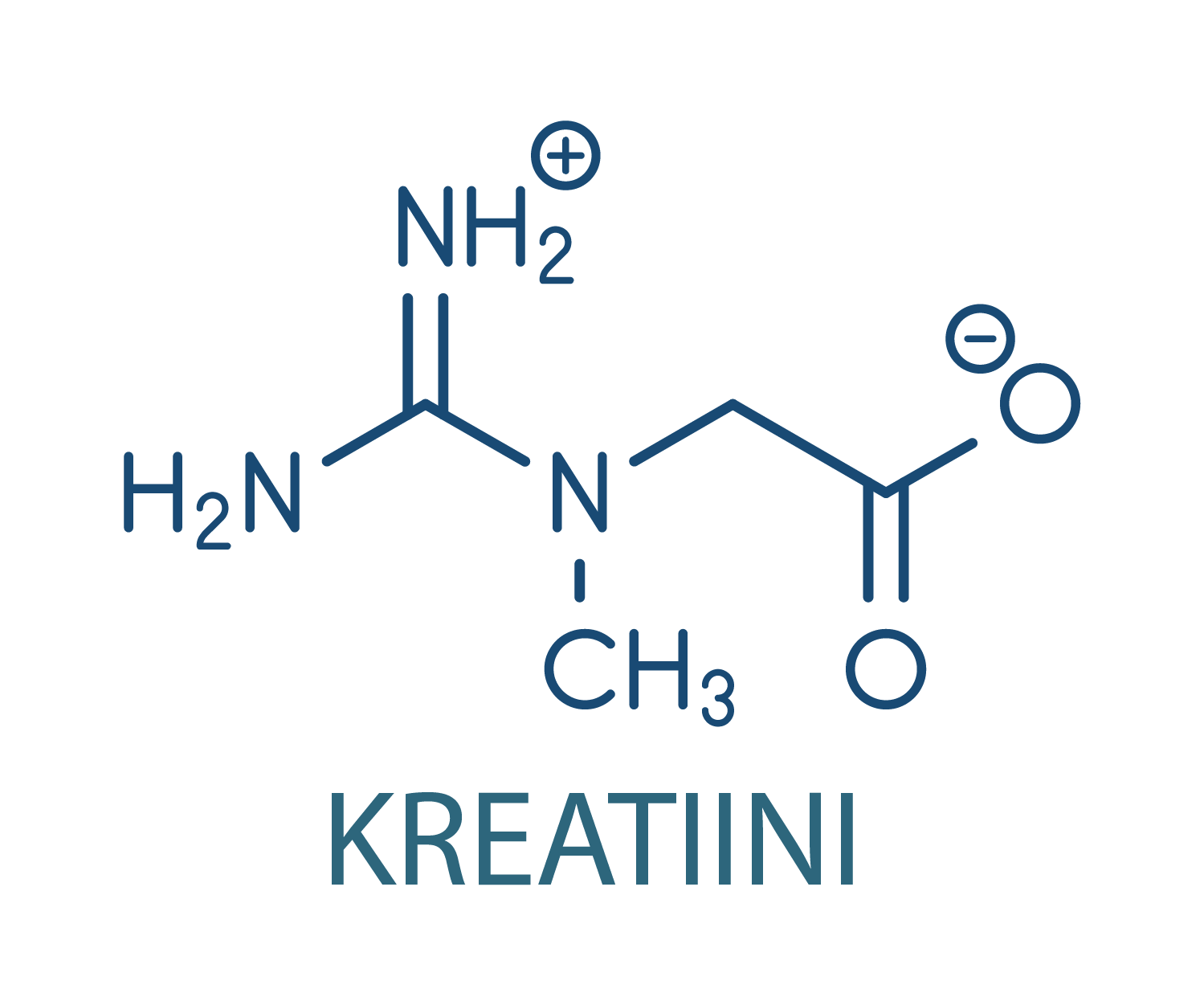 kreatiini kehonomi osteopatia hieronta kamppi helsinki